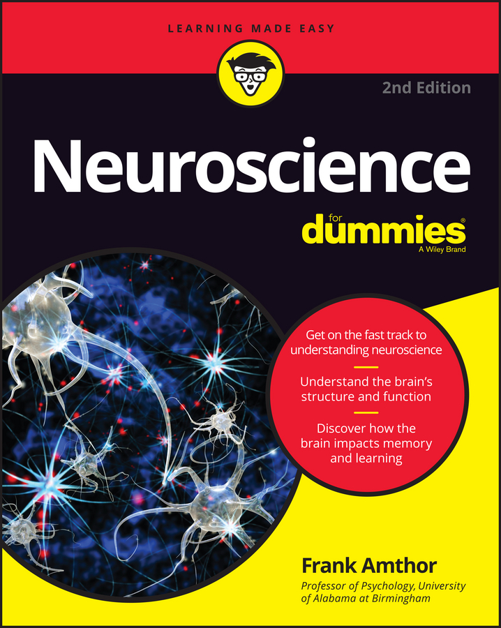 Frank Amthor Neuroscience For Dummies functional brain asymmetry myth and reality