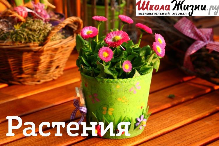 Екатерина Новосад Как забудешь незабудку? цена 2017