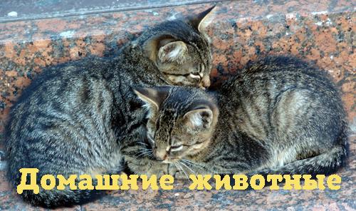 Богдан С.Петров Зачем корове рога?