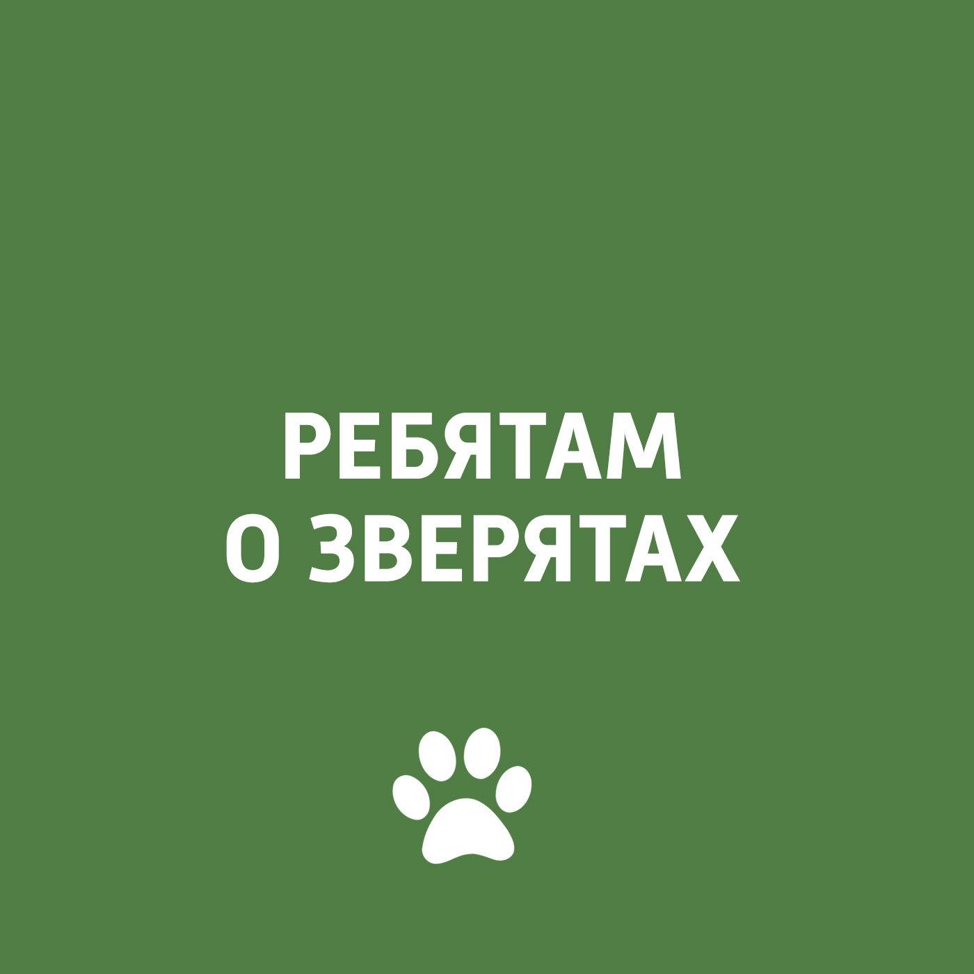Творческий коллектив программы «Пора домой» Вирусные заболевания у кошек и собак