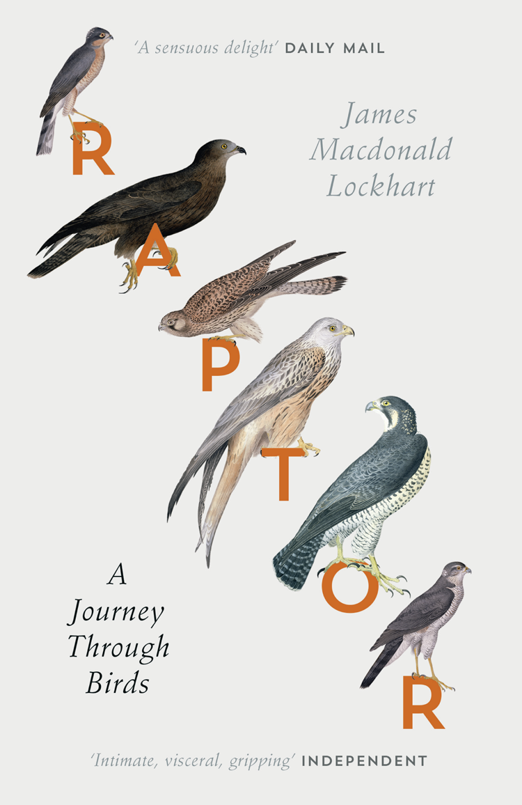 James Lockhart Macdonald Raptor: A Journey Through Birds brokis night birds silhouette of birds in the evening sky freedom of bird flight a poetic charm and unprecedented dynamism
