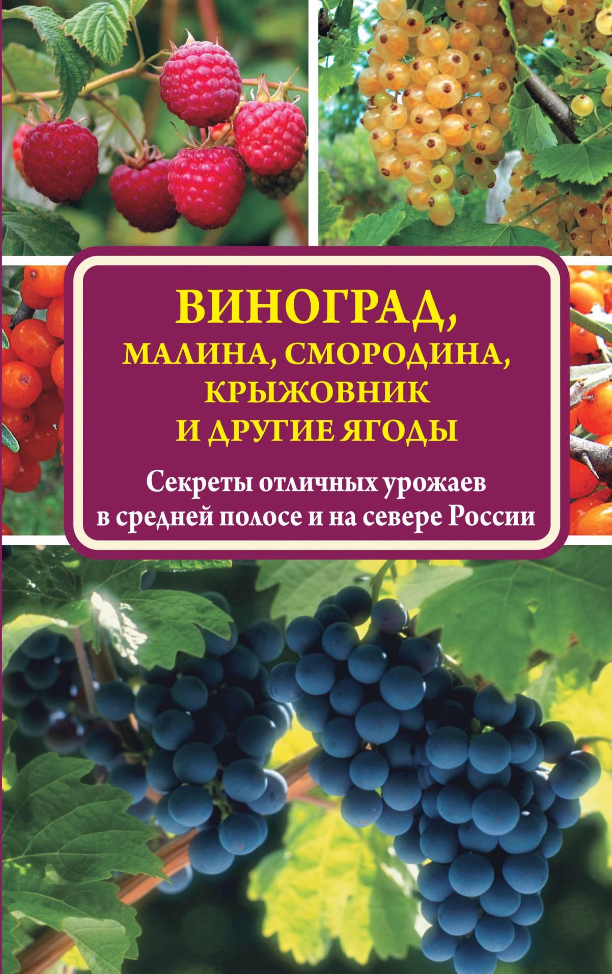 Виктор Жвакин Виноград, малина, смородина, крыжовник и другие ягоды виноград гарольд в москве