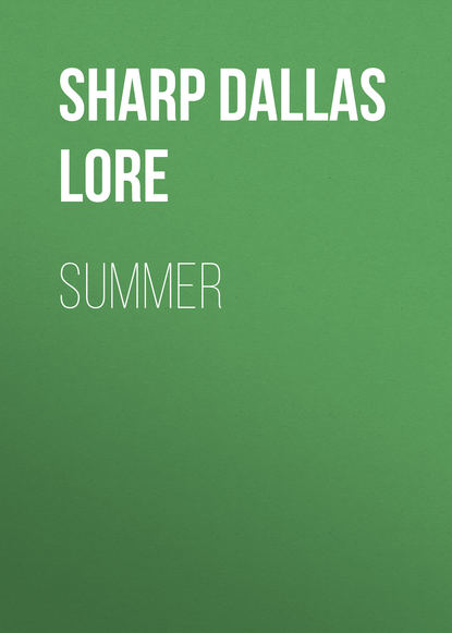 купить Sharp Dallas Lore Summer в интернет-магазине