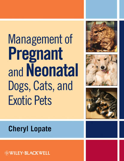 Cheryl Lopate Management of Pregnant and Neonatal Dogs, Cats, and Exotic Pets недорого