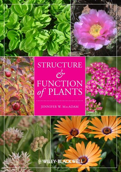 Группа авторов Structure and Function of Plants d keith payne alveolar structure and function