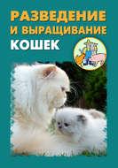 Разведение и выращивание кошек