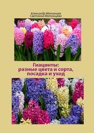 Гиацинты: разные цвета исорта, посадка иуход